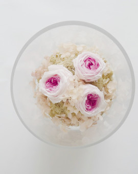 preserved_rose_13