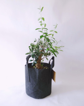 potted_plants_06