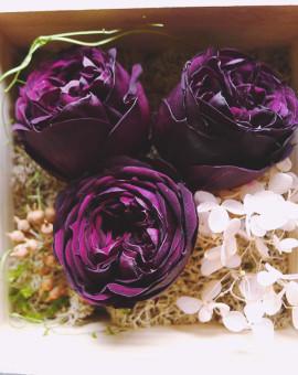 preserved_rose_06