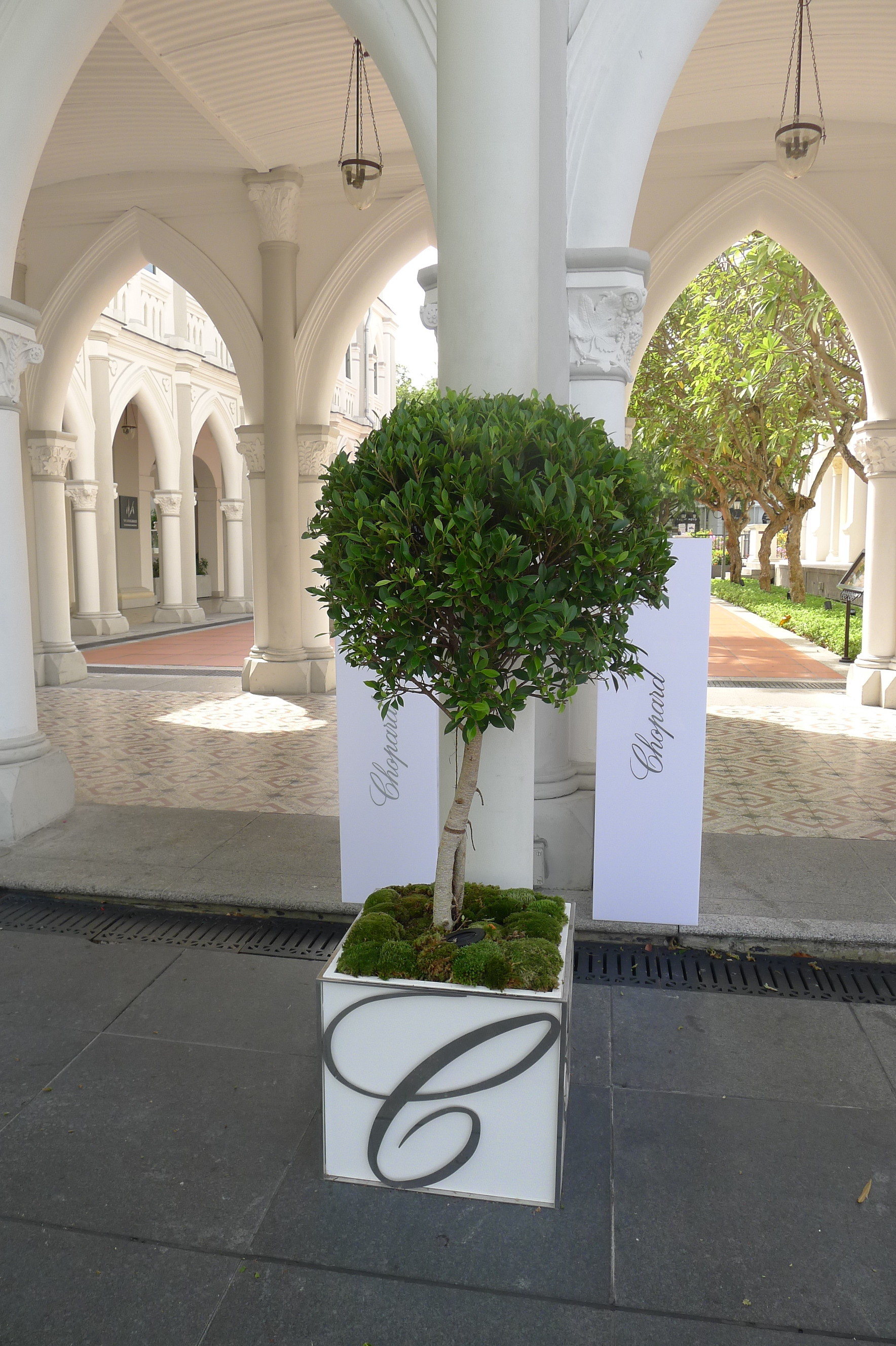 welcoming reception of ficus topiary and bouquets